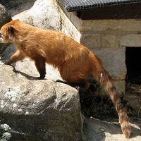 Ormányosmedve-kölykök születtek a Miskolci Állatkertben