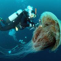 Fürdőzés 10 millió medúza között