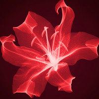 Fantasztikus fotók: röntgensugaras felvételek növényekről