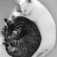 A nap képe: black and white