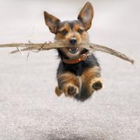 A nap képe: repülő kutya