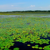 Zöld kalandok a Tisza-tónál