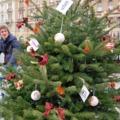 Tíz perc tekerés a város zöld karácsonyfájáért
