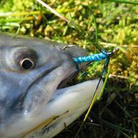 A horgászat nehézségei