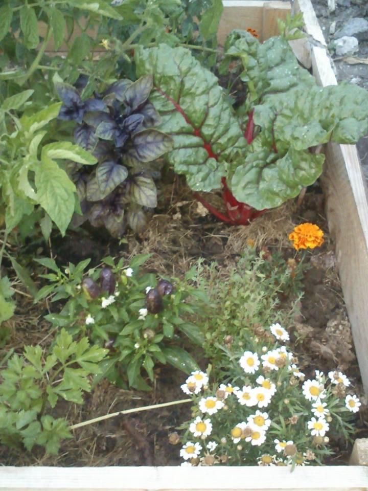 Álmodik a kertész - 2014