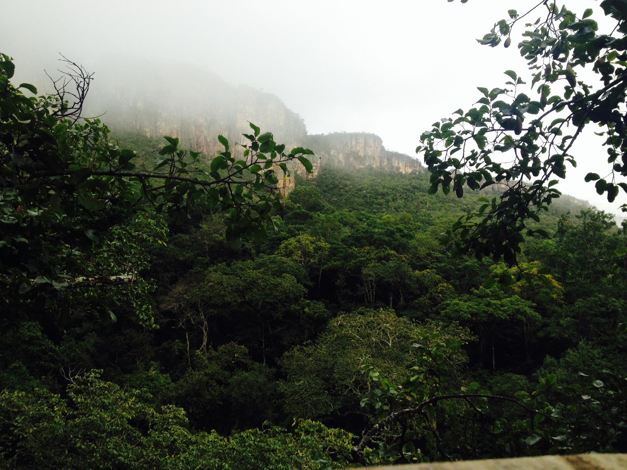 Az erdő 2
