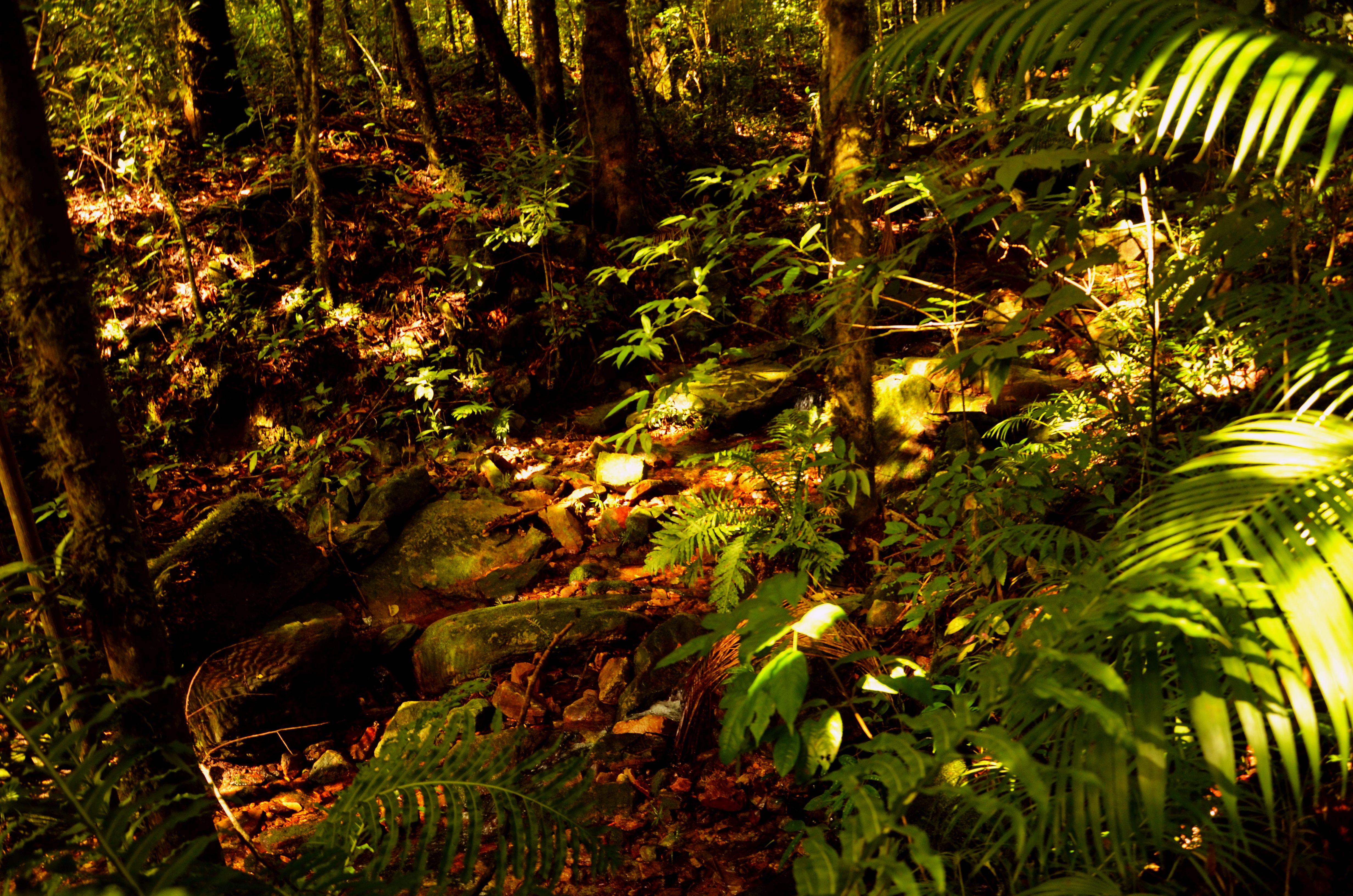 Az erdő