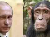 Putyin, a majmok és a gyilkolás ösztöne