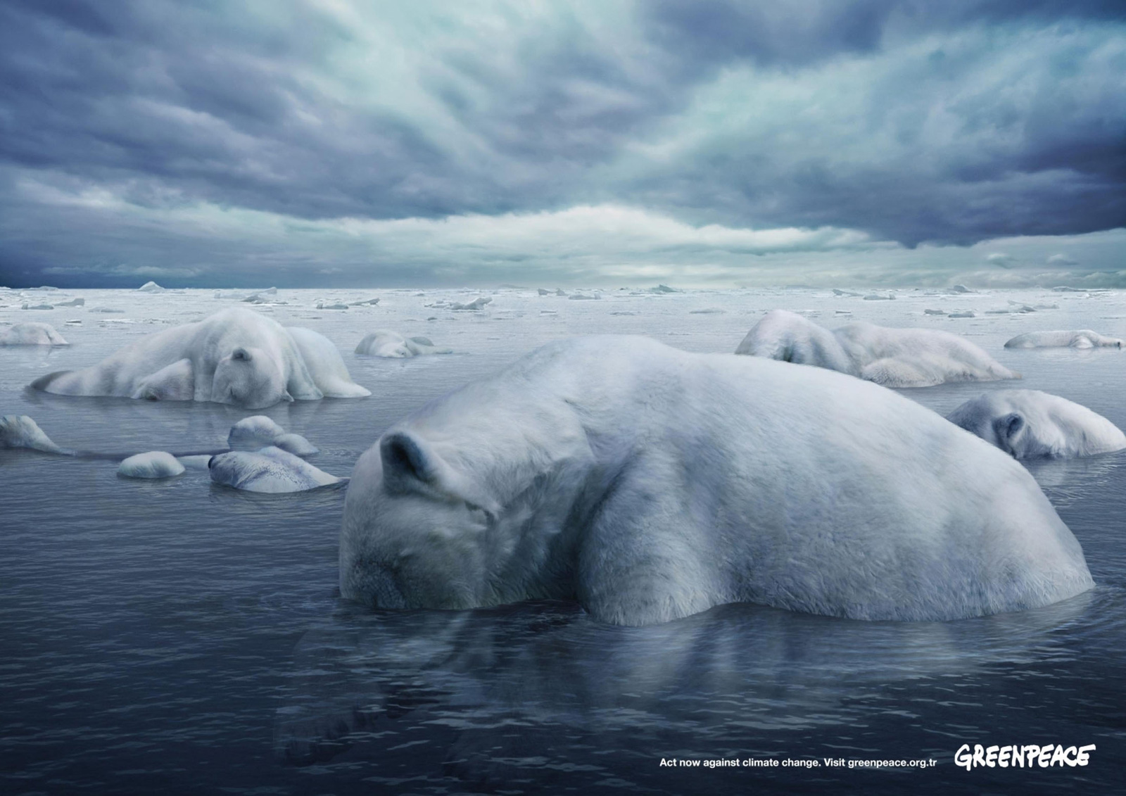 greenpeace-polar-bears.jpg