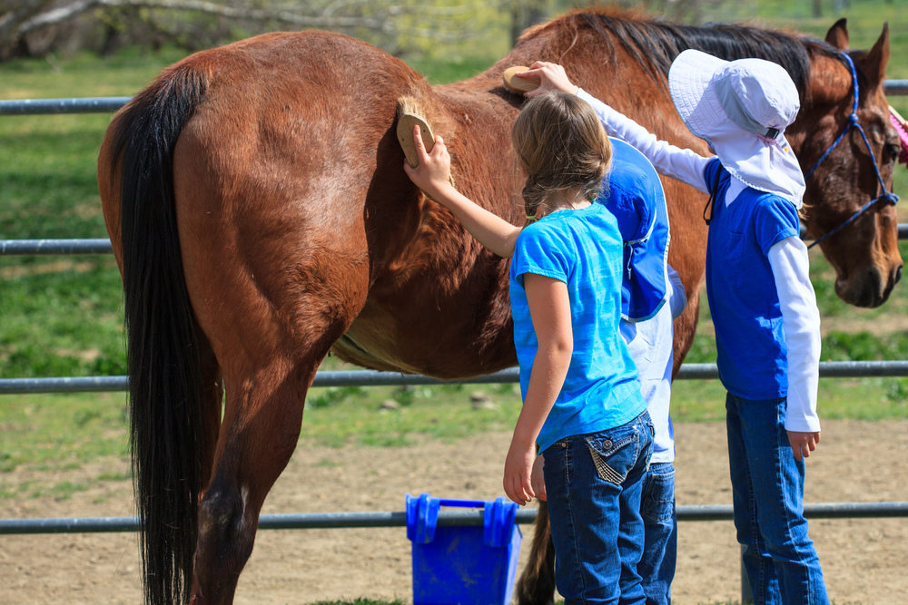 55_kids_brushing_horse.jpg
