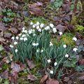 Várak, kastélyok Angliában: Hóvirágles a Mottisfont birtokon