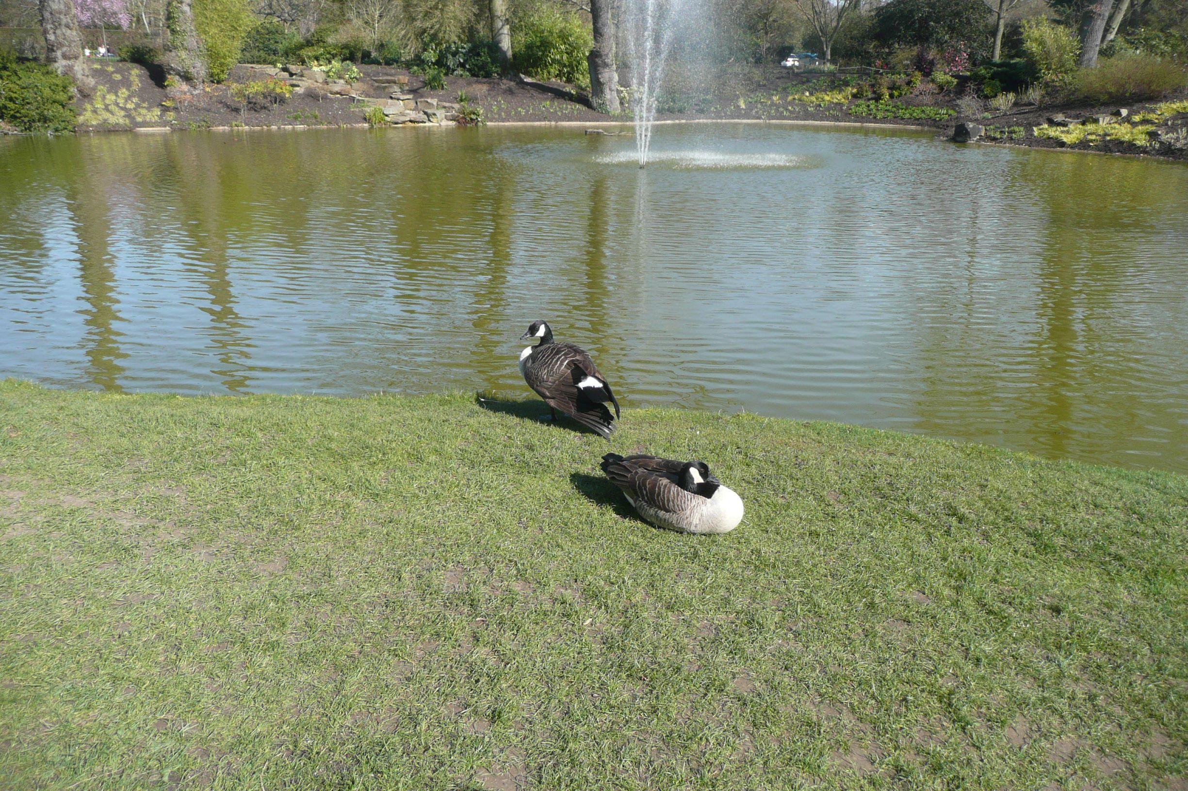 A vízi kert lakói