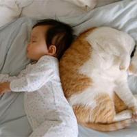 A kisbaba és a háziállat nyelve, avagy Maugli csak kitalált személy