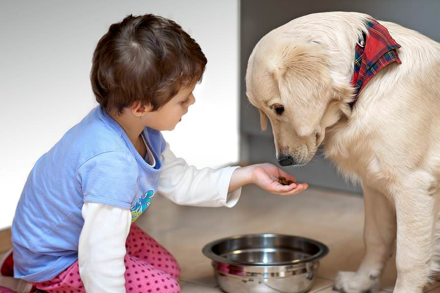 2-cute-child-feeding-his-pet-dog-bigstock-petr-jilek1.jpg