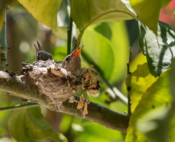birdsnet.jpg