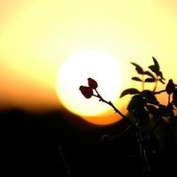 Hajnalodik
