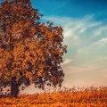 """""""Itt van az ősz, itt van ujra, S szép, mint mindig, énnekem."""""""