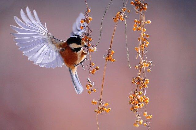 bird-1045954_640.jpg