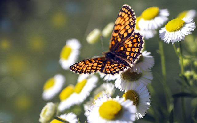 butterfly-5370356_640.jpg