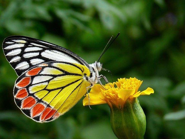 butterfly-85628_640.jpg