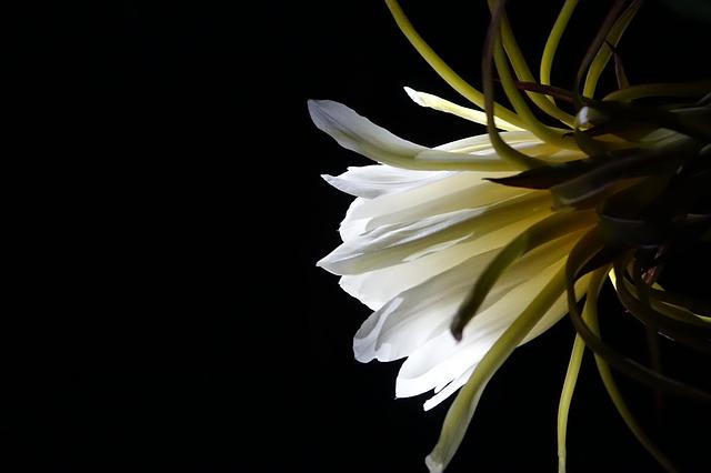 flower-1826323_640.jpg