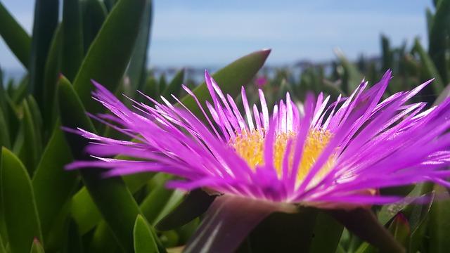 flower-2793054_640.jpg
