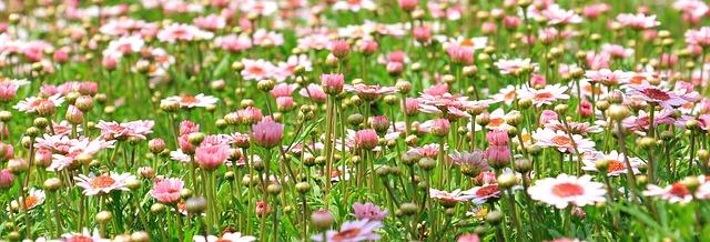 flower-meadow-1510602_640.jpg