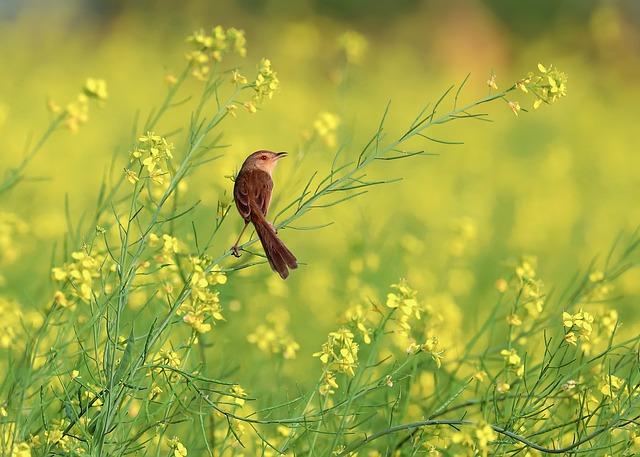flower-reform-3050083_640.jpg