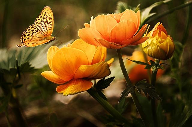 flowers-19830_640.jpg