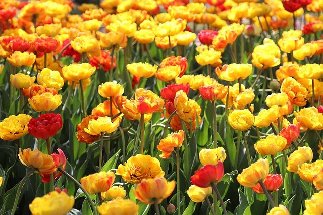 flowers-4200435_640.jpg