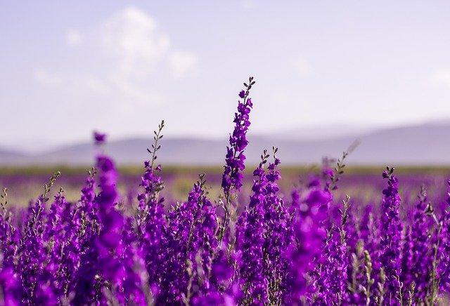flowers-5383054_640.jpg
