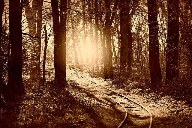 forest-4834589_640.jpg