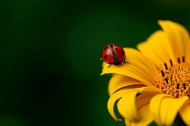 ladybug-3475779_640.jpg
