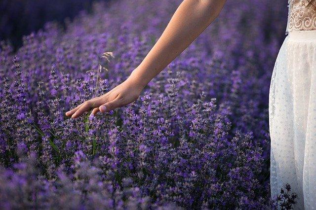 lavender-3576129_640.jpg