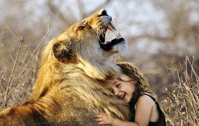 lion-3012515_640_1.jpg