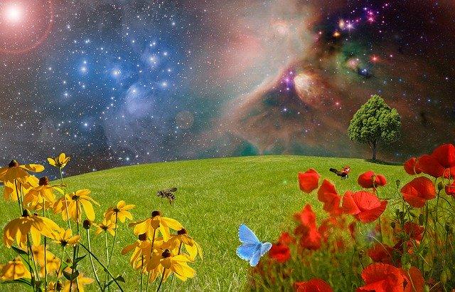 meadow-2401911_640.jpg