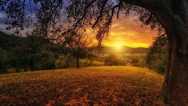 nature-3125912_640.jpg