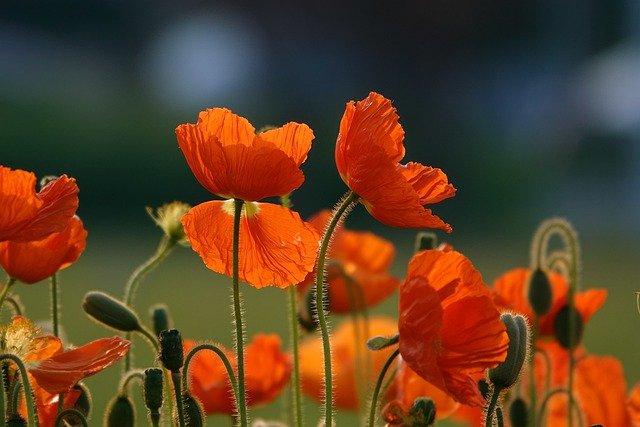 orange-flowers-6144272_640.jpg