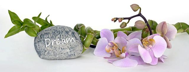orchid-2115261_640.jpg