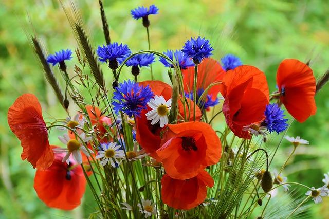 poppy-1431174_640.jpg