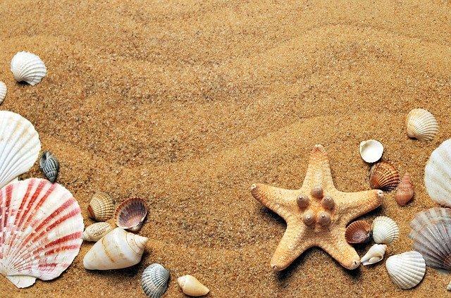 seashells-1337565_640.jpg