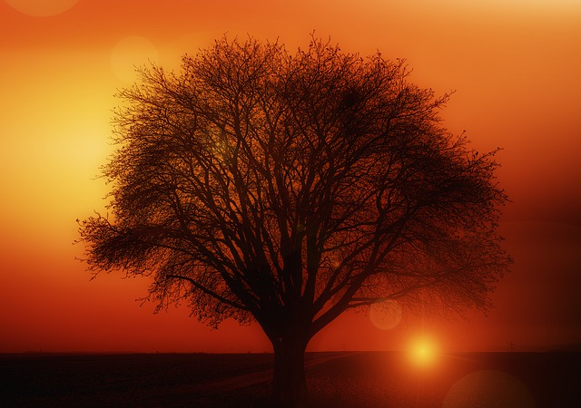 tree-117582_640.jpg