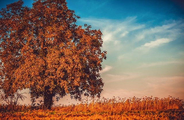 tree-3759573_640.jpg