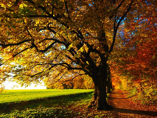tree-779827_640.jpg