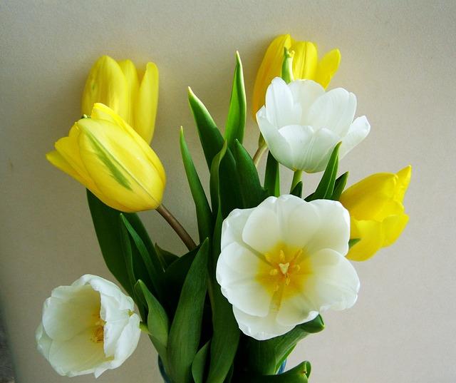 tulip-1997130_640.jpg
