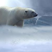 Amikor nem tágít a jegesmedve, avagy időnként jobb elengedni, mint önmagunk hajcsárává válni