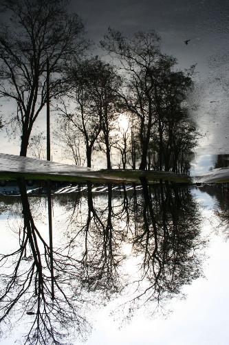 mirror_trees2.jpg