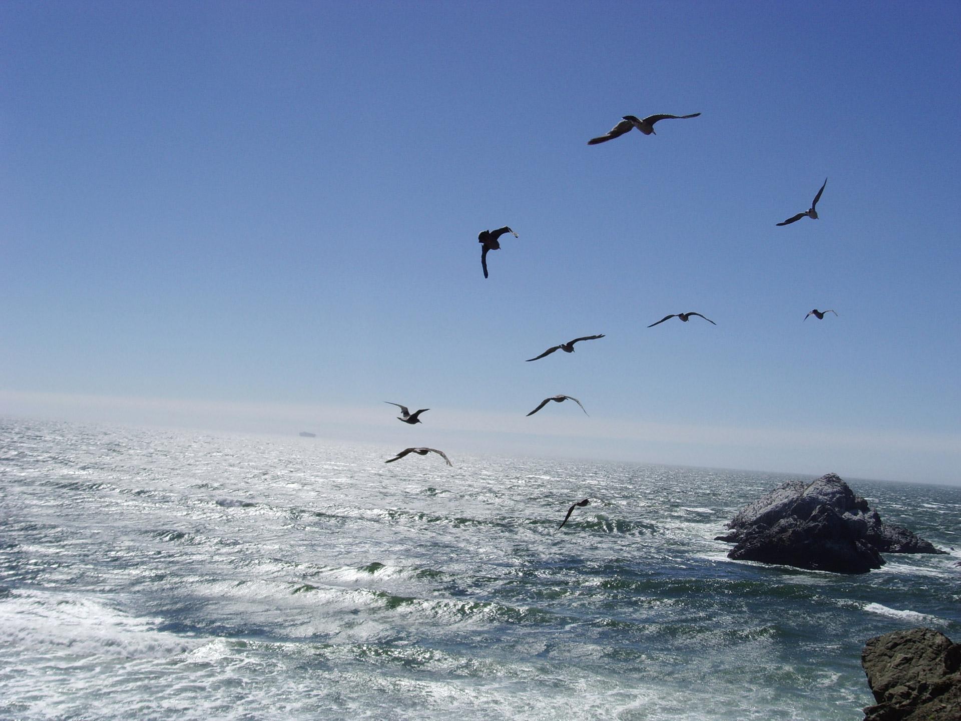 seagulls_flying_over_ocean.jpg