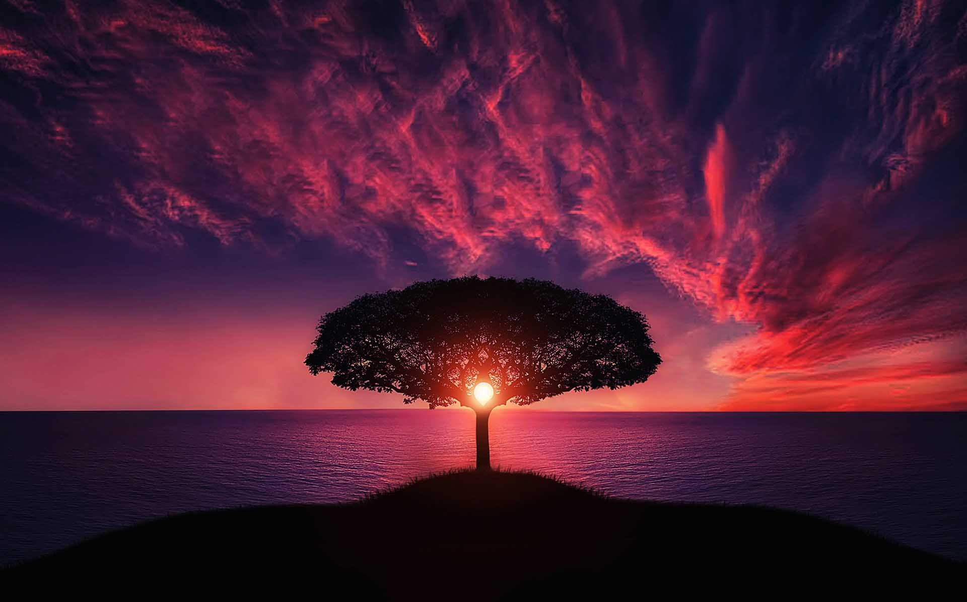 tree_sunset_beautifull.jpg