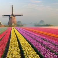 A tulipán buborék sosem létezett